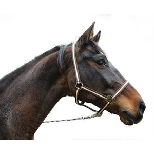 Horse halter - Brown
