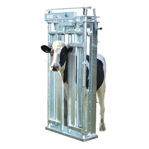 Cattle head gates auto-locking