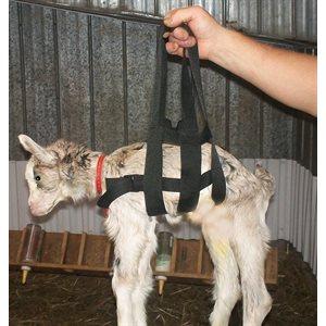Attache de pesage pour agneau